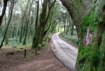 Sintra National Park